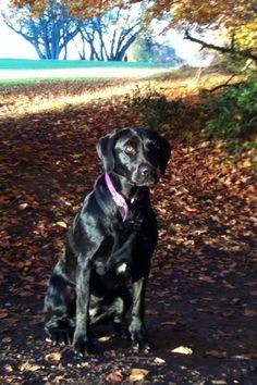 Autumn sunshine dog