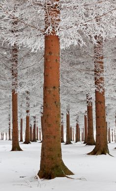 Magical forest in Sokobanja, Serbia -- photo: Dragisa Petrovic