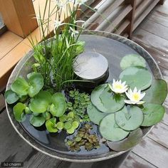 awesome backyard ponds and water garden landscaping ideas 00001 * kebun. Container Pond, Container Water Gardens, Container Gardening, Patio Pond, Ponds Backyard, Backyard Waterfalls, Garden Ponds, Koi Ponds, Small Water Gardens