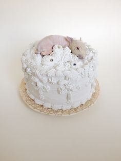 Bunny Cake - Taxidermy Baby Rabbit from Precious Creature, Lauren Kane