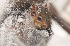 Squirrels. Be like the squirrel, girl, be like the squirrel.