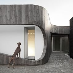 Casa Xieira II by A2+ Arquitectos.  Buildings are better with color-coordinated dogs.