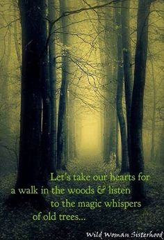 Let's take our hearts for a walk in the woods & listen to the magic whispers of old trees... WILD WOMAN SISTERHOOD™