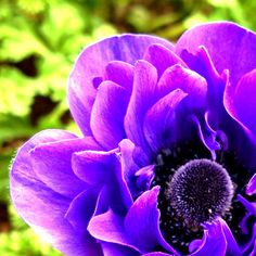 Purple flower (via #spinpicks)