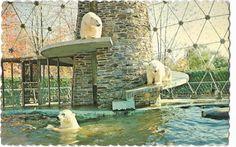 Ours polaires. Polar bears. Bird, Outdoor Decor, Vintage, Polar Bears, Wild Animals, Dog, Cards, Birds, Vintage Comics