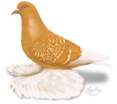 Dark Wings, Blue Wings, White Bar, Blue And White, Yellow, Pink Pigeon, California Colors, Medium Long, Beautiful Birds