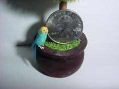 1:12 Scale Dollhouse Miniature Blue & Yellow Parakeet by June Girardi