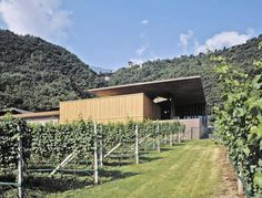 markus scherer architekt: nals margreid winery