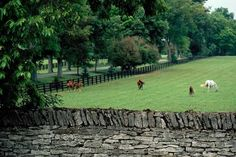 Two of my favorite things about Kentucky: horse farms and stone walls My Old Kentucky Home, Kentucky Derby, Horse Barns, Horses, Horse Stables, Kentucky Horse Farms, Great Places, Places To Visit, Fence Plants