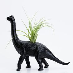 Awesome dinosaur planter. :-) Possible birthday present.