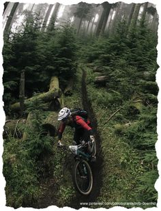 #MTB forest  www.pinterest.com/corroborante/mtb-downhill