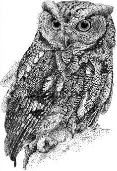 Owl Drawings | owls. I have demonstrated how to draw an owl by applying basic drawing ...