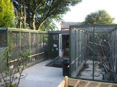 Nice backyard aviary setup