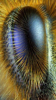 La Familia de la Apicultura - The Beekeeping of Family: Ojo de abeja obrera - Eye of worker bee - Abeille . Photo Oeil, Fotografia Macro, Macro And Micro, Bee Art, Bugs And Insects, Weird Insects, Tier Fotos, Mundo Animal, Bees Knees