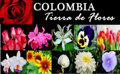 flores colombianas - Buscar con Google