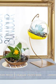DIY Hanging Planters using terrarium globe, ornament holder, paint, rocks. Diy Hanging Planter, Hanging Terrarium, Hanging Succulents, Diy Planters, Terrariums, Succulent Terrarium, Gold Terrarium, Diy Projects To Try, Crafts To Do