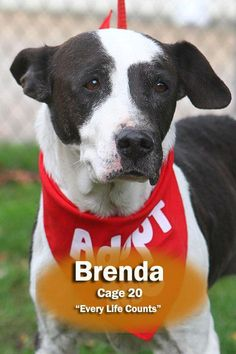 Meet ISO-2 Brenda/ADOPTED, a Petfinder adoptable Terrier Dog | Canton, OH | BRENDA needs a home who will love her as long as she lives.  If she has a deadly disease, why can't...