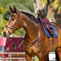 l Hunter jumper eventing horse equine grand prix dressage equestrian