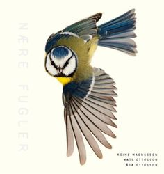 Free Read Close to Birds, An Intimate Look at Our Feathered Friends, Author : Mats Ottosson , Asa Ottosson, et al. Free Pdf Books, Free Ebooks, Agatha Christie, Award Winning Photography, Spiegel Online, Wild Creatures, Quiz, Spartacus, Book Photography