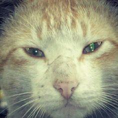 Swat Cat #igsg #clubshoutout #shoutout #instauno #instagramhub #insta_shot #all_shots #instagrammers #jj_challenge #home #instapicturing #instamood #ourbestshots #editfromtheheart #follow #greatfeeds #insta_sleep #cat #animal #like #instahub