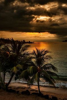 Sunset and coconut trees