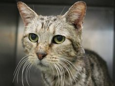 TO BE DESTROYED 5/3/13 Brooklyn Center NYC ACC $467 IN RESCUE PLEDGES TONY. ID # is A0962256. Female 10 YEARS old. Came when her owner died. She is grieving the loss of her owner and yet she remains sweet as can be. She was given a great EXPNOCHILD rating, and she is continually described as friendly throughout all her exams. Tony needs an angel tonight, and that angel could be YOU. Please start applying to rescue groups immediately to rescue Tony. She deserves so much love!