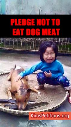 Pledge HERE not to EVER eat Dog Meat!!