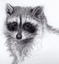 animals pencil drawings - Bing Images