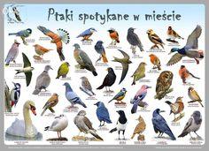 Plakaty edukacyjne Ptaki w Polsce Szczecin  • OLX.pl