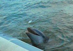 10 Fun Things to Do on Hilton Head Island with Kids: Go on a dolphin cruise.