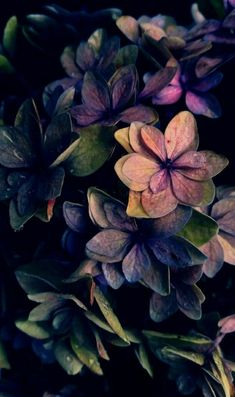 Hyper bunte gemalte Pappteller-Blumen - Bilder Huawei - - Madie U. Flower Wallpaper, Nature Wallpaper, Wallpaper Backgrounds, Phone Backgrounds, Wallpaper Darkness, Flower Aesthetic, Autumn Aesthetic, Belle Photo, Pretty Pictures