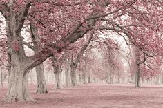LUV these pink trees ! I am also inspired by the simplicity & beauty of nature.