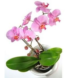 If you know me at all...then you know I always have an orchid in my room ..not sure why but they bring me peace...