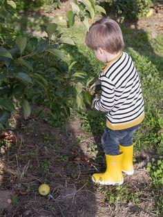 Cogiendo manzanas en Urt, País Vasco francés   Blog www.micasaencualquierparte.com