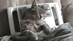 7 Best Cat Gifs of the Week