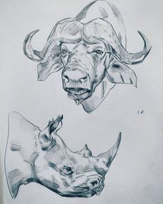 Wilhelm Kuhnert - Buffalo, black and green pencil, x cm. Big Five Watercolor Gallery Pencil Drawings Of Animals, Realistic Pencil Drawings, Animal Sketches, Art Drawings Sketches, Cool Drawings, Sketch Art, Buffalo Tattoo, Buffalo Animal, African Animals
