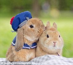 A natural:PuiPui, an adorable Holland Lop bunny from Tokyo, boasts over 24,000 followers on Instagram, and it's not difficult to see why