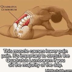 Good to know!! Stretch your QUADRATUS LUMBORUM every day to avoid lower back pain, especially if you sit for the majority of the day. #backpain #stretches  So true and lesser known!