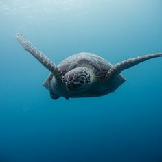Sea Turtle Freedive School - Moalboal, Phillipines