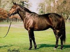 Partner's Hero(1994)(Colt) Danzig- Safely Home By Winning Hit. 4(C)x 5(F)x5(F) To Nearco. 33 Starts 8 Wins 5 Seconds 5 Thirds. $554,731. Won Ky Cup Sprint S(G2), Phoenix BCS, Marfa S, Hansel S, Rumson S, 2nd Iroquois S(G3), Jersey Shore BCS(G3), Aristides S, 3rd Frank J DeFrancis Memorial Dash(G2), Tom Fool H(G2), Commonwealth BCS(G2), DRC BC Sprint H, Tyro S. 1/2 Brother To Safely Kept. Entered Stud In 1999.