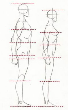 PROPORTIONS PROPORTIONS OF MALE AND FEMALE FIGURES ARE SIMILAR, DESPITE THE DIFFERENCES IN HEIGHT. THE WAY TO LEARN TO DRAW PROPORTIONS CORRECTLY, IS TO DO A LOT OF DRAWING.