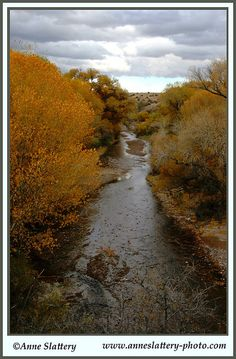 Fall Cottonwoods along the Mimbres River, New Mexico. IMG_A_56213 by The Bright Edge - Photography by Anne Slattery, via Flickr