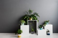 plants-and-planters-1.jpg