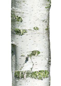 Haal de natuur in huis met deze muursticker boom uit de Home Tree collectie van KEK Amsterdam. Price €39,95