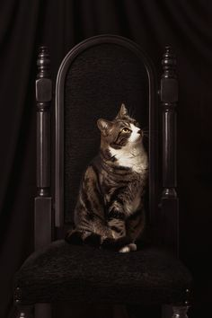 Family Portraits by Mirco Bonetti, via Behance