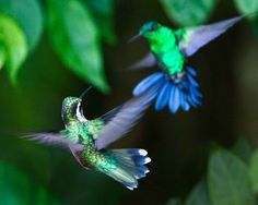 The Hummers ... Photography by Gloria Wilson