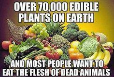 KingPinner BobbyGinnings #vegan #veganfood #veganlife