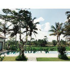 Ubud's morning view  #bali #nature #explorenature #exploreindonesia #visitindonesia #ricefield #travel #travelgram #instatravel #instadaily #vsco #vscocam #vscogood #businesstrip by meliawinata