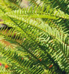 Viete, ktoré rastliny vás doma ochránia pred škodlivými látkami? | Môjdom.sk Plant Leaves, Plants, Plant, Planets