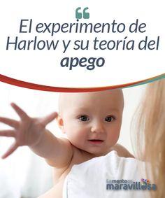 El experimento de Harlow y su teoría del apego  La teoría del apego se centra en los fenómenos psicológicos que se producen cuando establecemos lazos afectivos con las demás personas. La forma en la que lo hagamos vendrá condicionada por cómo nuestros padres se han relacionado con nosotros durante la infancia.